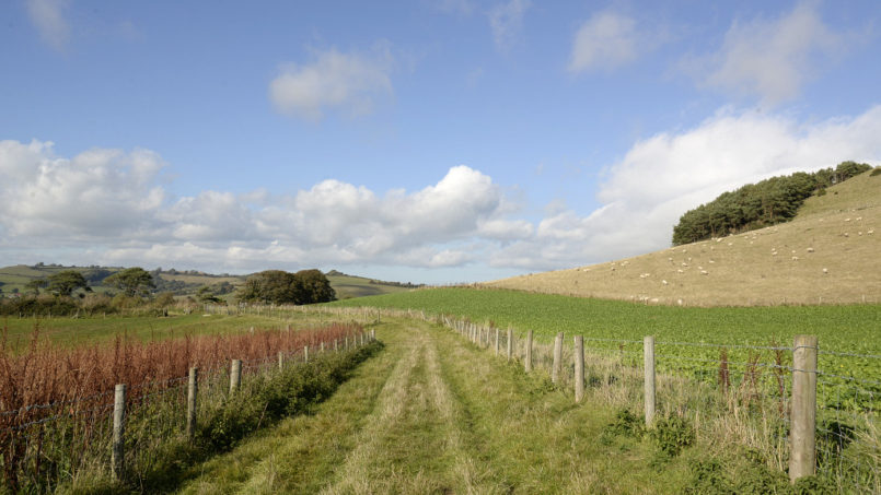 Must-Do Hiking and Walking Spots in Dorset